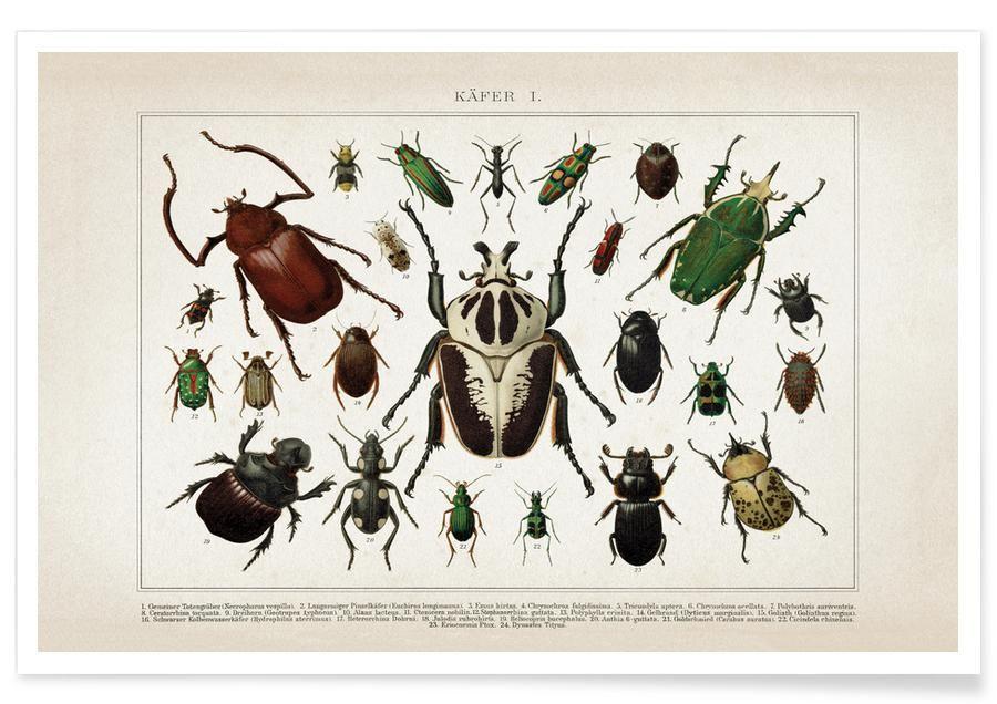 Käfer im Salat