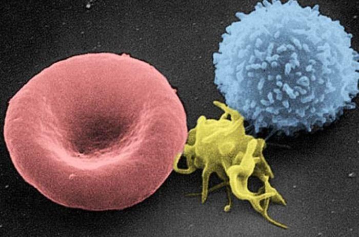 Flughundblut zur Immunisierung von SARS-CoV