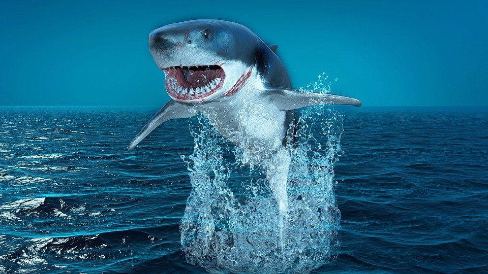 Weißer Hai gesichtet - See gesperrt