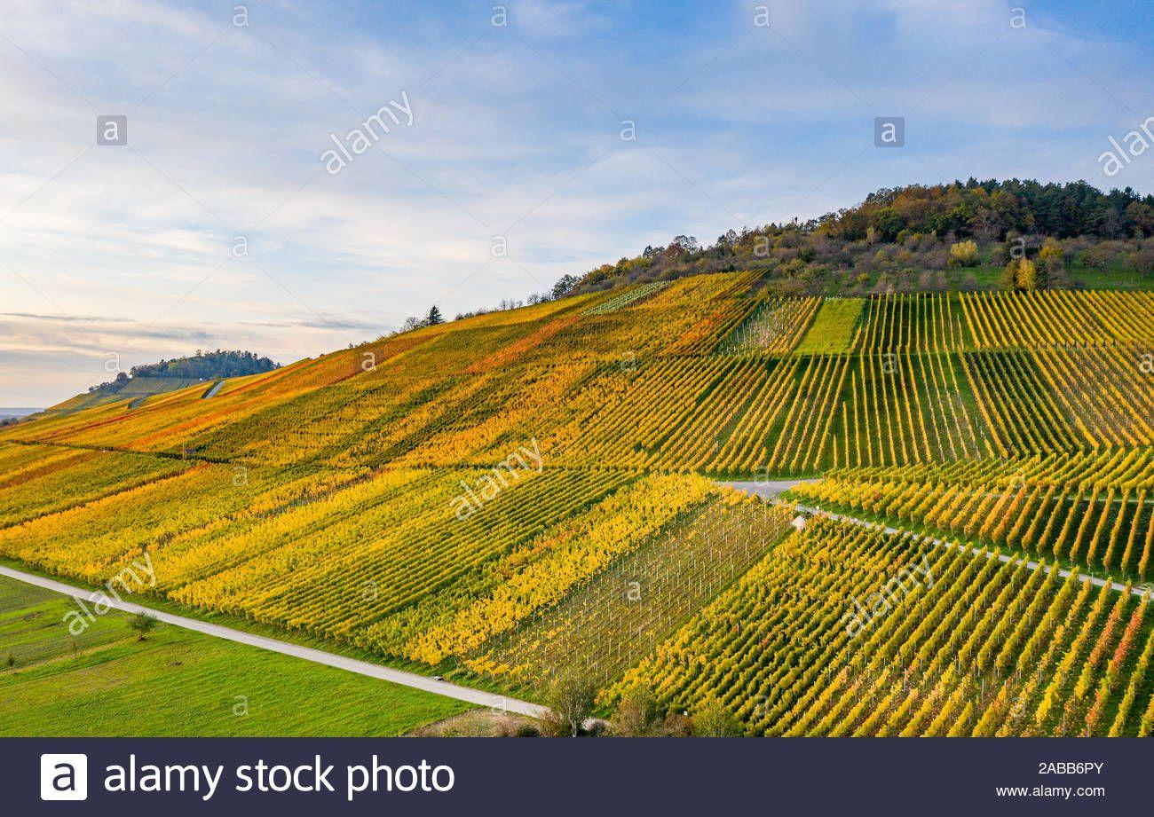 Wein Dynastie gerät ins Schwanken