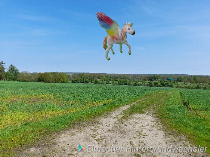 Fliegendes Pferd gesichtet