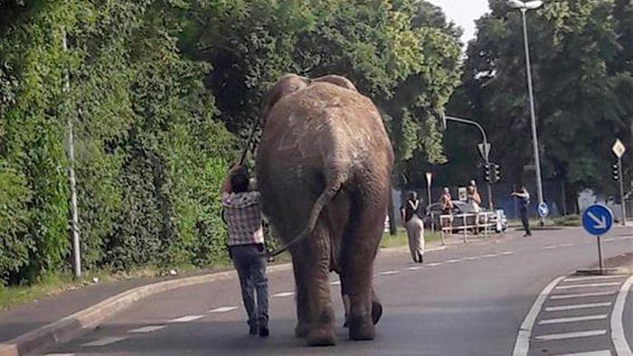 Elefant in Böblingen heimisch geworden